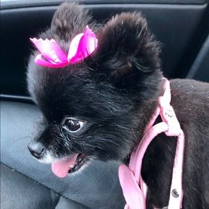 Accessories - Lulu the therapy doggy